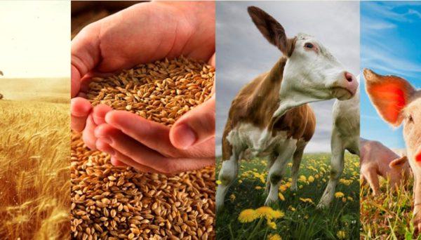 Сельское хозяйство поддержат средствами из резервного фонда