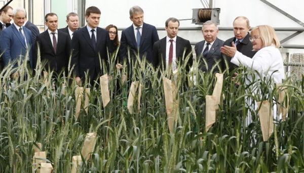 Путин оценил гибрид пшеницы и ржи и расставил приоритеты сельхозсектора на форуме в Краснодаре